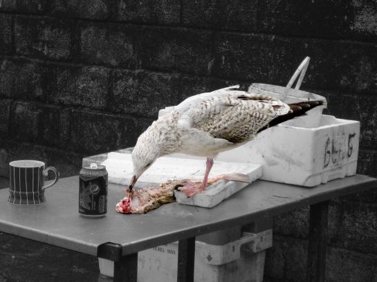 seagull image 5